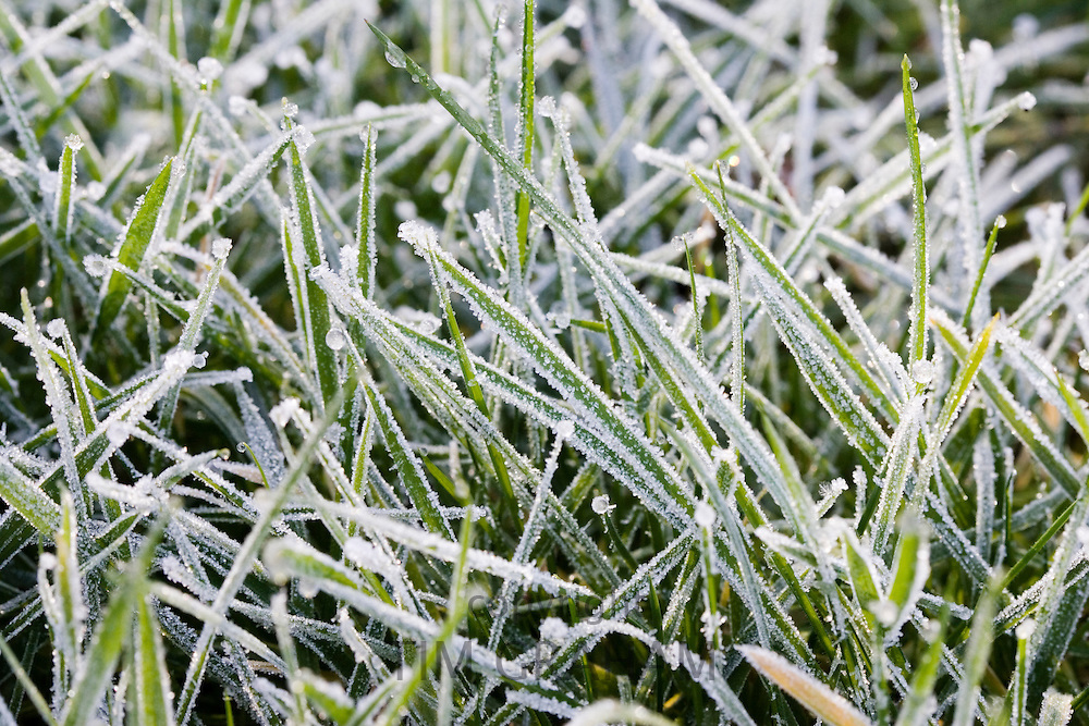Hoar frost covered grass, Swinbrook, Oxfordshire, United Kingdom