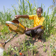 CAPTION: Fidelis watering the family's onion patch. The family waters using cans because they don't have a treadle pump (a manual pump which brings water to the dimba along a pipe or hose from the well). LOCATION: Nsanja-Seze, Vila Ulongwe area, Angonia District, Tete Province, Mozambique. INDIVIDUAL(S) PHOTOGRAPHED: Fidelis Dickson.