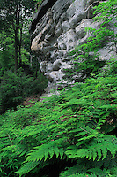 Sandstone and Common Male Fern (Dryopteris filix-mas), Mullerthal trail, Mullerthal, Luxembourg