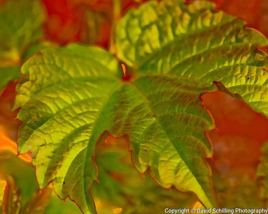 Leaf on Red