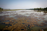 Algae growing on top of the water of a fish farm on the 2nd of October 2018 in Satkhira District, Bangladesh. Satkhira is a district in southwestern Bangladesh and is part of Khulna Division. It's main contributors to the economy are shrimp, fish and paddy farming. It is on the bank of the Arpangachhia River. (photo by Andrew Aitchison / In pictures via Getty Images)