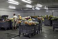 Mercato dei fiori di Sanremo: Una delle numerose celle frigorifere presenti all'interno del mercato.. *** Local Caption ***<br /> <br /> Sanremo Flower Market: One of the many cold rooms inside the market