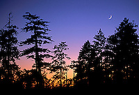 Silhouette of trees and moon in Yosemite National Park, CA.<br />