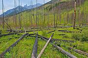 Banff National Park<br />Alberta<br />Canada