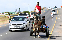 South Africa - Cape Town - 20 October 2020 - Every day in Cape Town's industrial areas, horses that haul carts of scrap-metal and wood, face traffic hazards and even bullets from gang fights. Their existences are tied to the character and fate of their owner or driver. The 'carties', as they are known, work in the tradition of their fathers and grandfathers, and depend heavily on the horses for their livelihood and the horses in turn depend on their owners and drivers for their welfare. In this, they are assisted by the Cart Horse Protection Association (CHPA), but the relationship is not without its tensions. Picture Leon Lestrade. African News Agency/ANA.