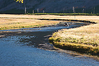 Open meadows along the Madison River provide a  wildlife habitat area. Yellowstone National Park, Wayomig, USA.