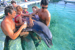 Taking Fluids From Dolphin