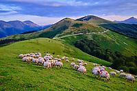 France, Pyrénées-Atlantiques (64), Pays Basque, paturage au col des veaux // France, Pyrénées-Atlantiques (64), Basque Country, pasture at the col des veaux