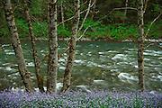 Sauk river scene