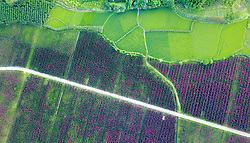 July 18, 2017 - Huaying, Huaying, China - Huaying, CHINA-July 18 2017: (EDITORIAL USE ONLY. CHINA OUT) ..Aerial photography of rice fields in Huaying, southwest China's Sichuan Province. (Credit Image: © SIPA Asia via ZUMA Wire)