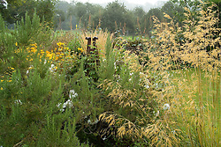 Rosemary and Stipa gigantea in an autumn border