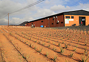 Aloe vera plants commercial cultivation factory building, Tiscamanita, Fuerteventura, Canary Islands, Spain