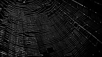 Spider Web. Image taken with a Nikon 1 V2 camera, FT1 adapter, and 70-300 mm VR lens (ISO 160, 185 mm, f/5, 1/60 sec).