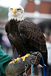 Crystal palace mascot Kayla the American Bald before the game