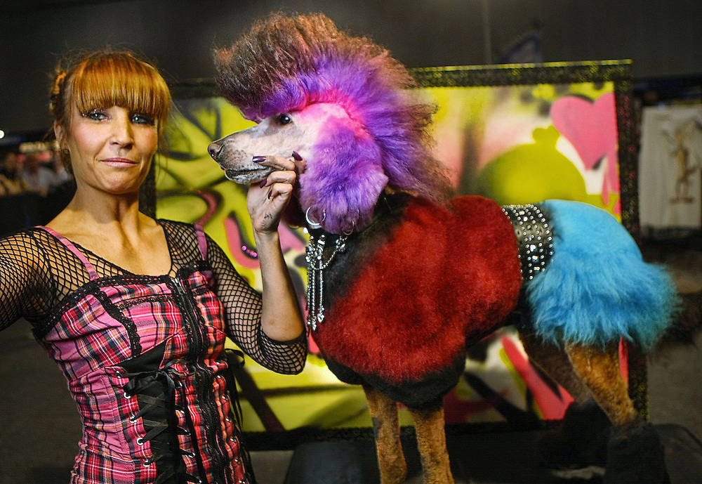 Creative Grooming competition at the Pet Expo, at the Exhibition & Convention Centre. Punk: Bridget the standard poodle. Creative stylist: Prue Garner, from Sydney   - Pic By Craig Sillitoe 09/09/2010 melbourne photographers, commercial photographers, industrial photographers, corporate photographer, architectural photographers, This photograph can be used for non commercial uses with attribution. Credit: Craig Sillitoe Photography / http://www.csillitoe.com<br /> <br /> It is protected under the Creative Commons Attribution-NonCommercial-ShareAlike 4.0 International License. To view a copy of this license, visit http://creativecommons.org/licenses/by-nc-sa/4.0/.