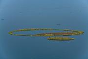 Fisherman in his canoe behind a huge round phumdis, Loktak Lake, Moirang, Manipur, India