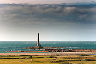 A scenic view of the lighthouse of Goury in the Cotentin Peninsula, with in the foreground a small herd of cows grazing next to the shore. A very common view - cows and lighthouses! - in Normandy.
