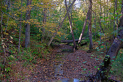 08 October 2013:   As with most forests, trees fall and are only removed if they are a danger to humans.  These have fallen across a creek in Yellowwood State Forest.<br /> <br /> Yellowwood State Forest was created on leased federal land in 1940.  It was later (1956) deeded to the state of Indiana.  More than 2000 vacant and eroded acres were planted with pine, black locust, black walnut, and red and white oak.  Yellowwood Lake is 133 acres and about 30 feet deep.<br /> <br /> This image was produced in part utilizing High Dynamic Range (HDR) processes. It should not be used editorially without being listed as an illustration or with a disclaimer. It may or may not be an accurate representation of the scene as originally photographed and the finished image is the creation of the photographer.