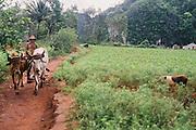 Viñales Farmer Cuba Photography