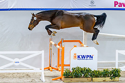 110, Numos<br /> KWPN Hengstenkeuring 2021<br /> © Hippo Foto - Dirk Caremans<br />  03/02/2021