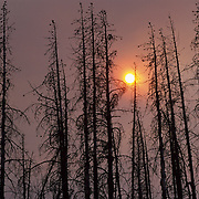 Smoke from the 1994 fires and dead forest from the 1988 fires within Yellowstone National Park.