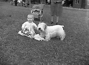 """04/08/1952 <br /> 08/04/1952<br /> 04 August 1952  <br /> Dog Show, 18th Annual Green Stan Championship at Monkstown, Co. Dublin. Baby Elenor  Crummie, The Square, Rathfriland, Co. Down with Miss E. Crummies """"Grey Buttons"""" B. Breed and Green Star winner."""