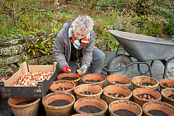 Carol Klein planting up terracotta pots with tulips