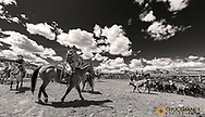 Cattle branding day at the Theodore Roosevelt Memorial Ranch near Dupuyer, Montana, USA