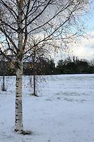 Glenageary Dublin in the snow November 2010
