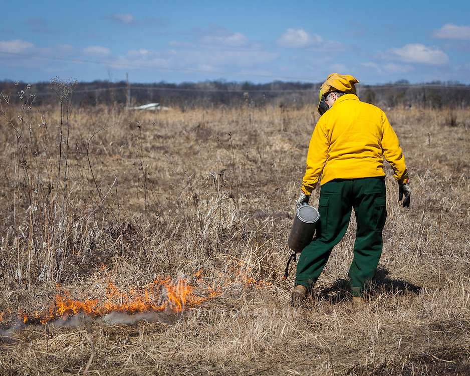 The prairie grasses are ignited with a drip–torch.