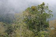 Alishan National Scenic Area, Taiwan