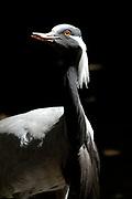 Avifauna, Europa's grootse vogelpark. / Avifauna - the largest bird sanctuary in Europe