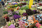 """""""New Covent Garden Wholesale Flower Market"""" (Photograph must be captioned like this - I had to sign a contract!!)<br /><br />""""Zest"""" Market shop sells British flowers, and also international factory flowers. The central ailes are British Local Flowers<br /><br />The main selling days for local British fresh flowers are on Monday and Thursday mornings. The main sellers are Pratleys<br /><br />British local flowers, grown nearby, count for around 10% of the UK market, traveling less than a tenth of their foreign counterparts which are often flown in from abroad. Nearly 90% of the flowers sold in the UK are actually imported, and many travel over 3000 miles. Local flower farms help biodiversity, providing food and habitat to a huge variety of wildlife, insects including butterflies, bugs, and bees. Often local flower farmers prefer to grow organic rather than using pesticides. British flowers bloom all the year around, even in the depths of winter, and there are local flower farms throughout the country.<br /><br />Many people like the idea of the just picked from the garden look, and come to flower farms throughout Britain to pick their own for weddings, parties and garden fetes. Others come for the joy of a day out in the countryside with their family. Often a bride and her family will come to pick the flowers for her own wedding, some even plant the seeds earlier in the year."""