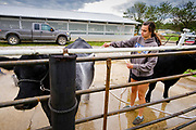 21 JULY 2020 - COLFAX, IOWA: A high school student washes one of her steers at the Jasper County Fair in Colfax, about 30 miles east of Des Moines. Summer is county fair season in Iowa. Most of Iowa's 99 counties host their county fairs before the Iowa State Fair. In 2020, because of the COVID-19 (Coronavirus) pandemic, many county fairs were cancelled, or scaled back to concentrate on 4H livestock judging. The Iowa State Fair was cancelled completely. The Jasper County Fair cancelled most events and focused on just the 4H contests.             PHOTO BY JACK KURTZ