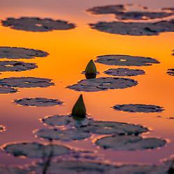 """""""Lago (paisagem) fotografado em Burarama, distrito do município de Cachoeiro de Itapemirim, no Espírito Santo -  Sudeste do Brasil. Bioma Mata Atlântica. Registro feito em 2018.<br /> ⠀<br /> ⠀<br /> <br /> <br /> ENGLISH: Lake Landscape photographed in Burarama, a district of the Cachoeiro de Itapemirim County, in Espírito Santo - Southeast of Brazil. Atlantic Forest Biome. Picture made in 2018."""""""
