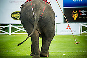Elephant Polo in Hua Hin