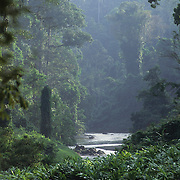 A rainforest in Danum Valley. Sabah, Malaysia