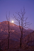 Moonlight illuminates scorched earth and burnt trees along Big Tujunga Canyon road, from Station fire in September, 2009. San Gabriel Mountains, Angeles National Forest, Los Angeles, California ,USA