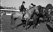Malcomson, Miss R. 'Mr P' Bally Vaughan, Clonmel, Winner of Competition K at RDS Horse Show.08/08/1952