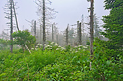 Scenic of trees and otehr vegetationalonhg the trail to the gannet colony<br />