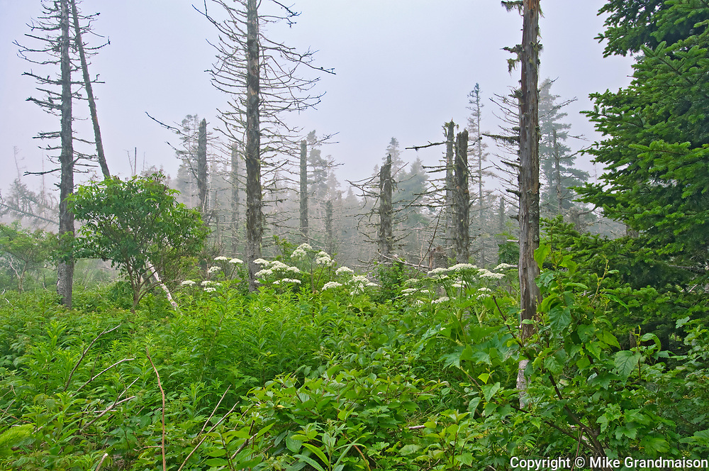 Scenic of trees and otehr vegetationalonhg the trail to the gannet colony<br />Ile Bonaventure<br />Quebec<br />Canada