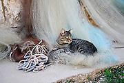 Cat sitting on fishing nets, village of Vrboska, island of Hvar, Croatia