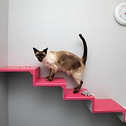 Rockhall Veterinary