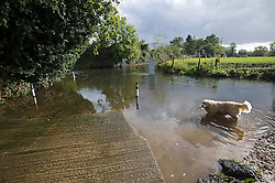 © London News Pictures. 17/10/2012. Charvil, UK. A dog wading in water at a  closed road at a ford on the River Loddon in Charvil, Berkshire where the road has flooded on October 17, 2012 following heavy rain last night. Photo credit : Ben Cawthra /LNP