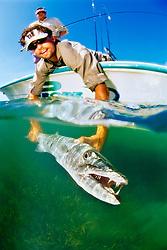 sport fishermen releasing a large great barracuda, Sphyraena barracuda, caught by fishing in flats, Stiltsville, Biscayne National Park, Miami, Florida, USA, Caribbean Sea, Atlantic Ocean Ocean
