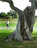 VILAMOURA - Algarve - Oceanico Victoria  Golfcourse, boom als logo ,   COPYRIGHT KOEN SUYK