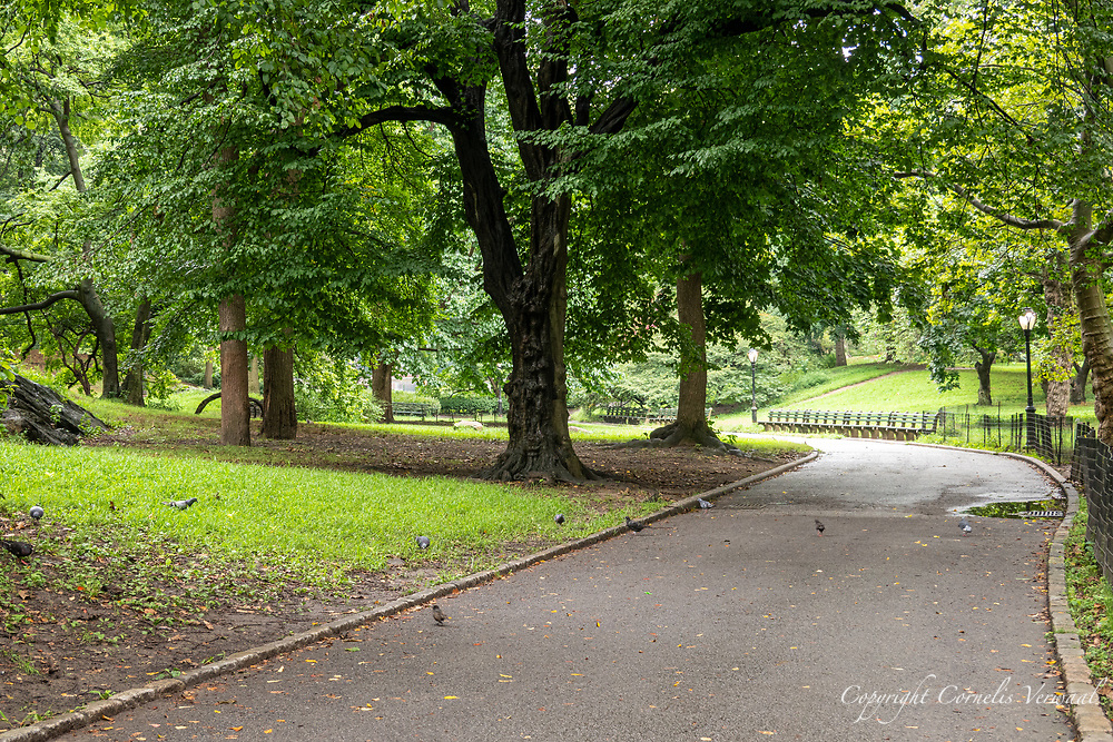 Central Park was almost deserted after this morning's rain; Aug. 19, 2020.