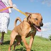 20120304 Woman Walking Dog