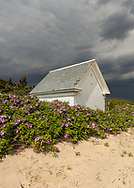 The oil house for the former lighthouse at Mayo Beach is surrounded by rugosa roses.