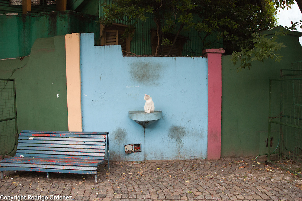 A cat can be seen on Caminito street, in La Boca neighborhood of Buenos Aires, Argentina.<br /> Caminito is a pedestrian street created in the late 1950s by local painter Benito Quinquela Martín and other artist friends to recreate a version of the old immigrant neighborhood of La Boca, using wood and corrugated zinc painted in bright colors. Today, Caminito and the surrounding areas feature cafes, souvenir shops, tango dancers and other street performances aimed to attract tourists.